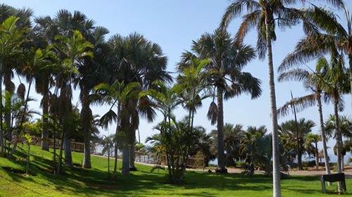 Palmetum de Santa Cruz